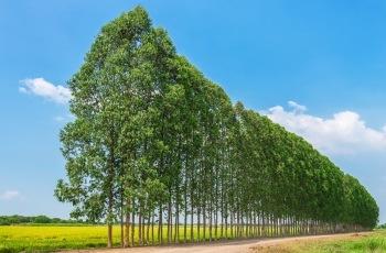 NJ – Carreteiro que atuava em plantações de eucalipto e que não dispunha de sanitários no serviço será indenizado por danos morais